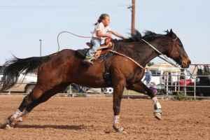 Barrel Horses Under 10 000